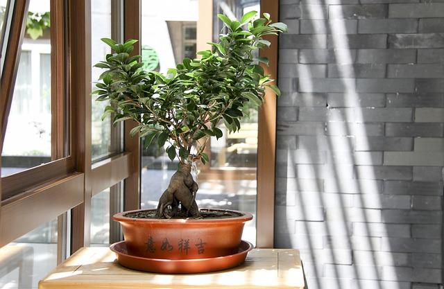 Pielęgnacja drzewek bonsai