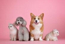 Prawidłowa opieka nad zwierzakiem